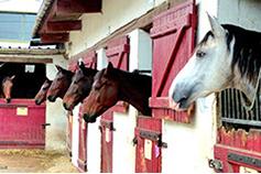 chevaux21-crop-u4289-crop-u1047